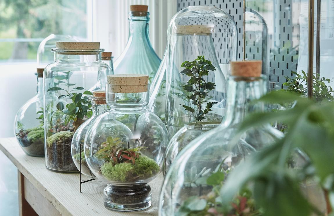 Flaschengärten Terrarien Pflanzen im Glas Green Bubble