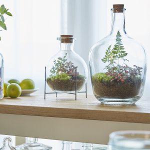 terrarien-terrarium-pflanzen-moos-farn-im-glas-greenbubble