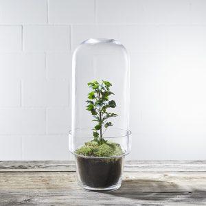 pflanzen-terrarium-bell-bubble-tall-bepflanzt-kaufen