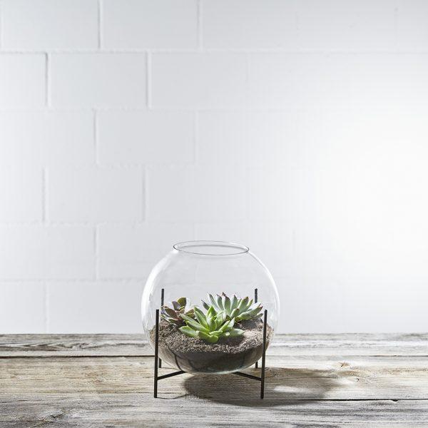 sukkulenten-terrarium-desert-bubble-bepflanzt