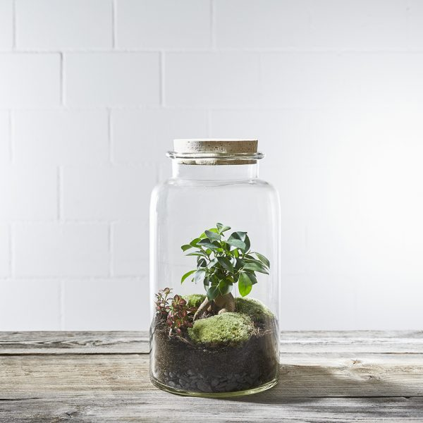 flaschengarten-dr.-bubble-bepflanzt