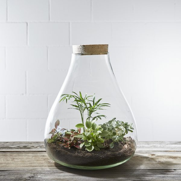 flaschengarten-terrarium-giant-jungle-greenbubble