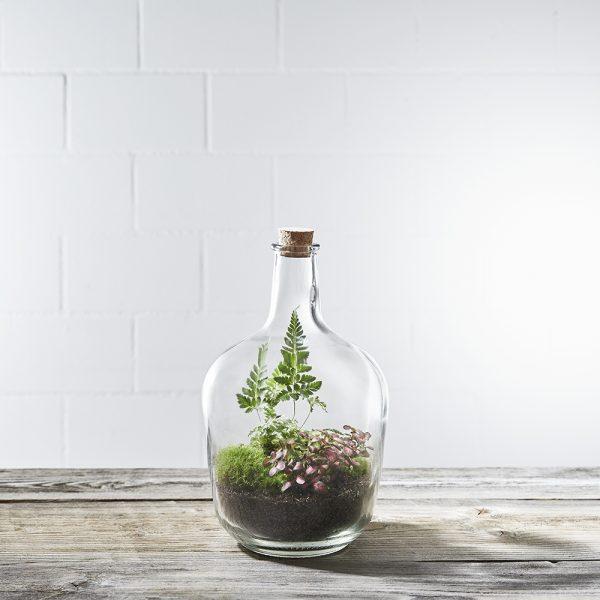flaschengarten-green-giraffe-fertig-fertig-bepflanzt-kaufen