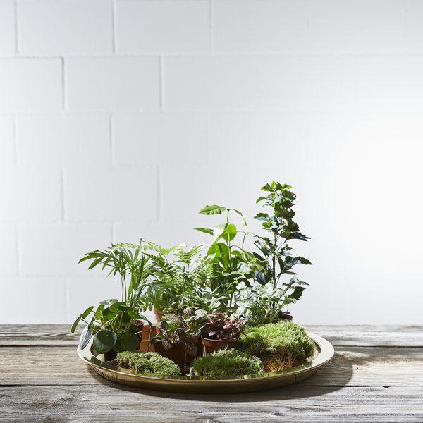 terrarium-pflanzen-auswahl-greenbubble