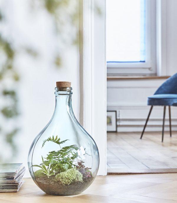 terrarium-pflanzen-flasche-mostflasche-greenbubble