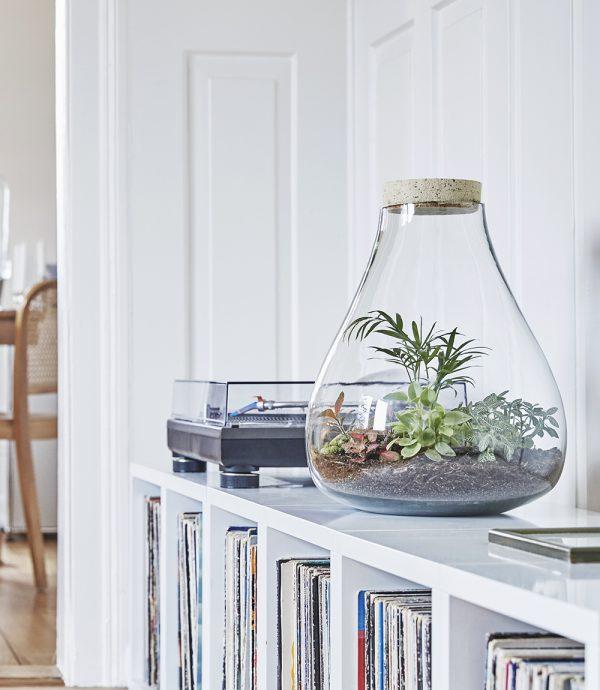 tterrarium-flaschengarten-pflanzen-im-glas-