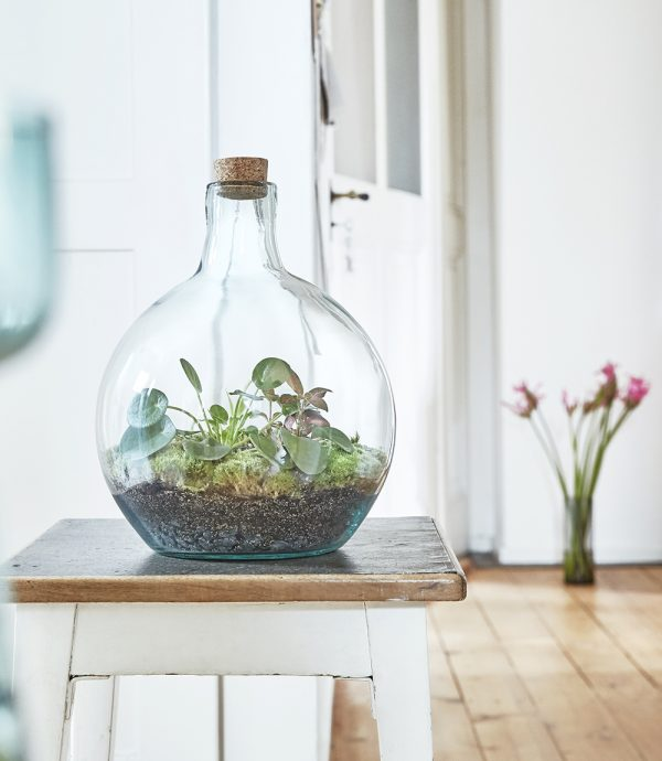 terrarium-pflanzen-im-glas-pilea-greenbubble