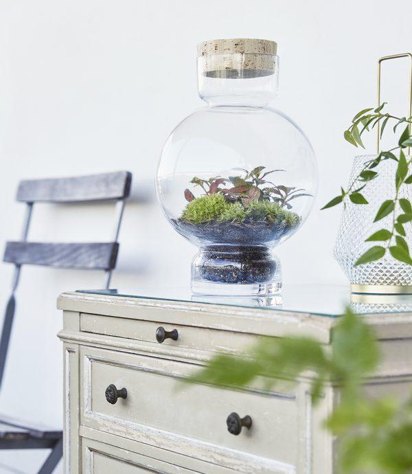 errarium-pflanzen-moos-im-glas-greenbubble