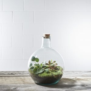 terrarium-two-fisch-and-an-elephant-large-greenbubble