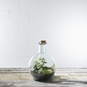 flaschengarten-fish-bubble-small-bepflanzt-kaufen