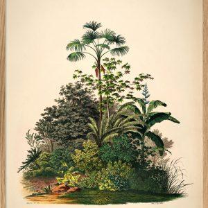 Mauritia-aculeata-the-dybdahl-pflanzenprint-kaufen-schweiz