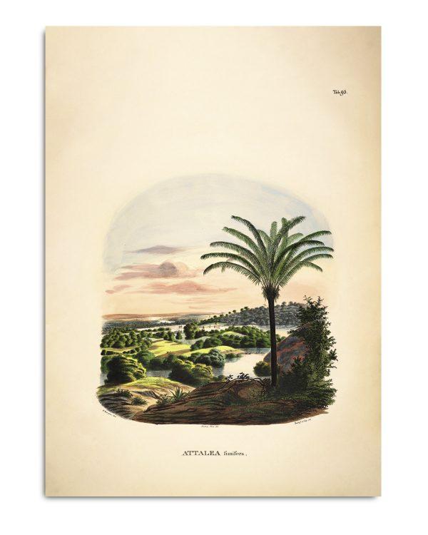 pflanzenbild-attalea-funifera-the-dybdahl-kaufen-schweiz