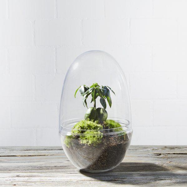 flaschengarten-terrarium-glas-house-of-stockholm