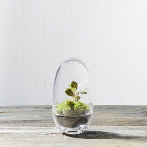 ei-förmiger-mini-flaschengarten-moos