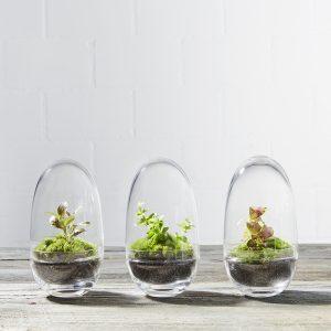 mini-pflanzen-terrarien-flaschengärten-mit-moos-in-ei-form