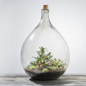 flaschengarten-office-delight-54-fertig-bepflanzt-kaufen