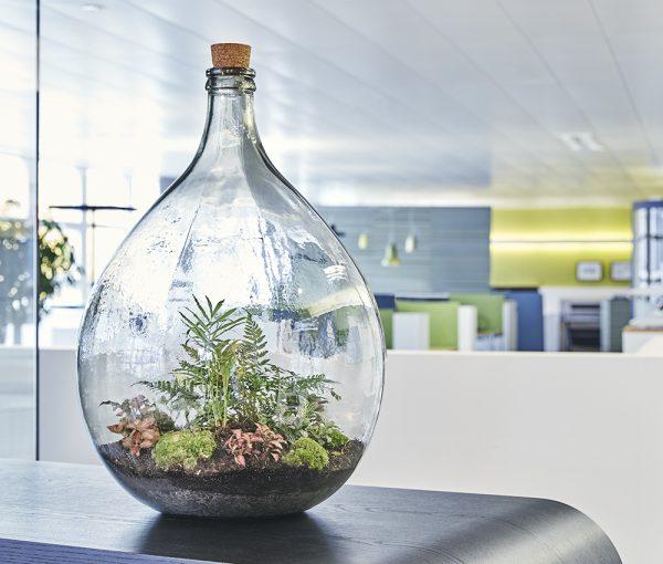Flaschengarten-office-delight-54-kaufen-bepflanzt-schweiz