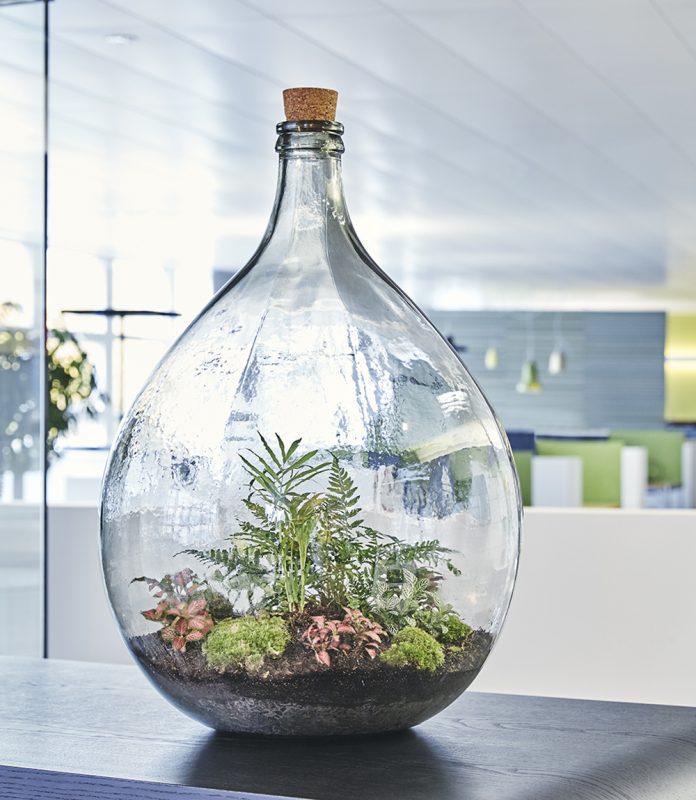Urwald-im-glas-kundengeschenk-flaschengarten