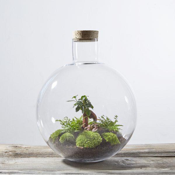 flaschengarten-bepflanzt-kaufen-schweiz