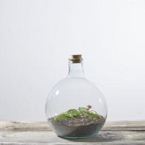 flaschengarten-diy-kit-kaufen-schweiz