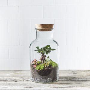 flaschengarten-apothecary-bepflanzt-kaufen