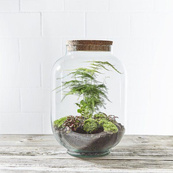 flaschengarten-mit-zierspargel-bepflanzt-kaufen-in-zuerich
