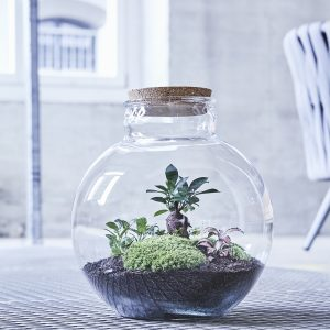 flaschengarten-globe-garden-bepflanzt-kaufen-schweiz