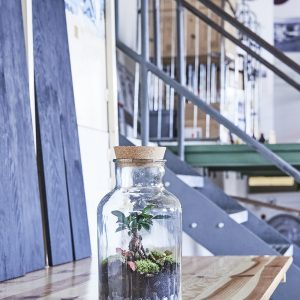 flaschengarten-the-apothecary-kaufen