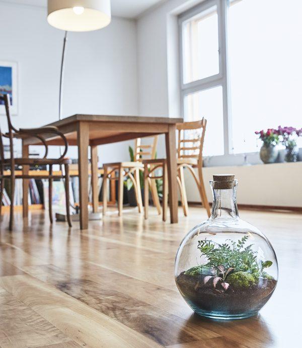 flaschengarten-bepflanzt-kaufen-pflanzen-im-glas