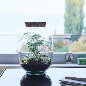 pflanzen-im-glas-kaufen-zuerich