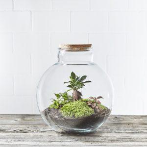 flaschengarte-globe-garden-kaufen-schweiz