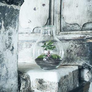 barbabellas-garden-flaschengarten-terrarium-pflanzen-im-glas-schweiz