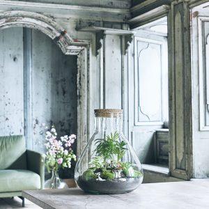 erlenmeyers-jungle-flaschengarten-terrarium-pflanzen-im-glas-schweiz