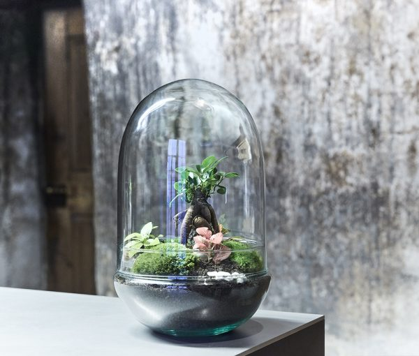 dome-of-avalon-flaschengarten-pflanzen-im-glas-schweiz