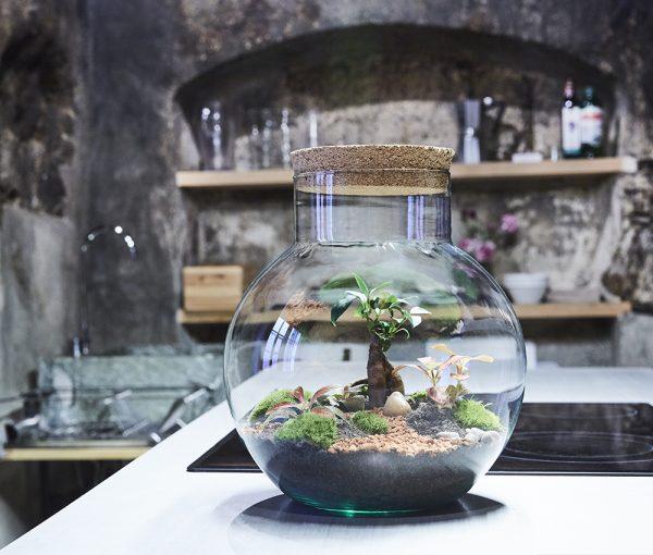 waimea-canyon-flaschengarten-terrarium-schweiz-kaufen