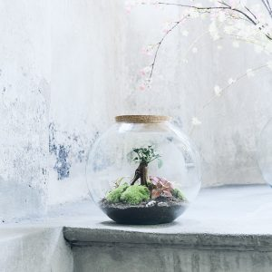 globe-garden-flaschengarten-terrarium-kaufen-schweiz