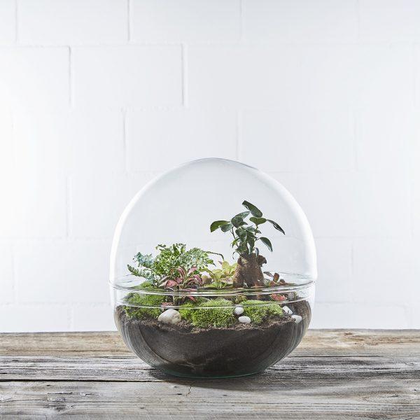 biosphere3-flaschengarten-terrarium-kaufen-schweiz