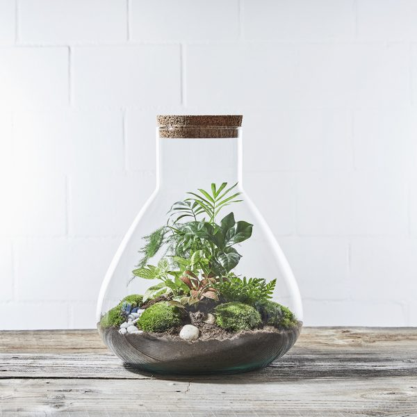 erlenmeyer-jungle-flaschengarten-terrarium-kaufen-schweiz