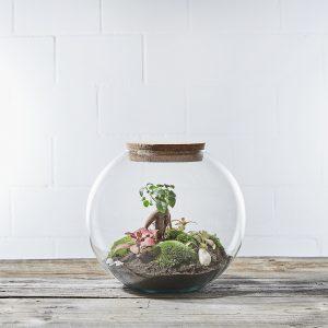 globe-garden-flaschengarten-terrarium-schweiz-kaufen